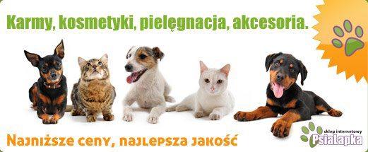 psialapka-pl_sklep-internetowy