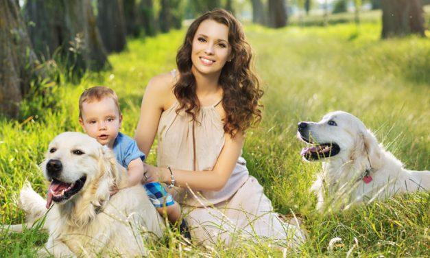 PsiaLapka.pl, czyli subskrypcja premium SMS zamiast obiecanej wyprawki dla psa